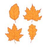 Cztery Pomarańczowego liścia Obraz Stock