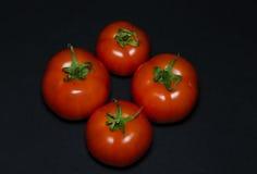 cztery pomidora Fotografia Stock