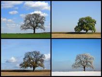 cztery pory roku obrazy royalty free