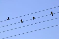 cztery przewód ptaków Zdjęcia Stock