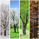 Cztery sezonów kolaż Zdjęcie Stock