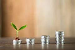 Cztery stosu kłaść na drewnie pieniądze, drewniany tło, naturalne światło, finanse, interes, wzrost, cztery kroka Zdjęcie Stock