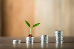 Cztery stosu kłaść na drewnie pieniądze, drewniany tło, naturalne światło, finanse, interes, wzrost, cztery kroka Obraz Stock