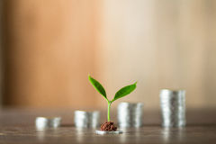 Cztery stosu kłaść na drewnie pieniądze, drewniany tło, naturalne światło, finanse, interes, wzrost, cztery kroka Zdjęcie Royalty Free