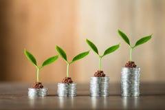 Cztery stosu kłaść na drewnie pieniądze, drewniany tło, naturalne światło, finanse, interes, wzrost, cztery kroka Obraz Royalty Free