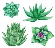 Cztery typu zieleni kaktusy Vera i aloes, ręka rysująca akwareli ilustracja ilustracja wektor