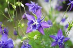 czułość kwiat Obraz Royalty Free