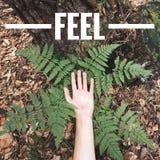 Czuć natura Zdjęcie Royalty Free