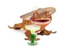 Czubaty gekon jest ubranym sombrero z margarita Zdjęcia Royalty Free