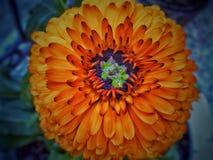 Czuje kwiatu zdjęcia stock