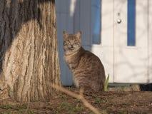 Czujny kota obsiadanie blisko drzewnego bagażnika, słoneczny dzień obraz royalty free