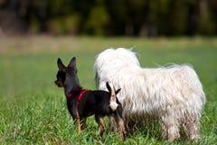 Czujny pies zdjęcie stock