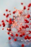 Czuli czerwieni i menchii kwiaty, odgórny widok, zakończenie up, romantyczny, stołowy położenie, dekoracja, ślub, macierzysty ` s Obraz Royalty Free