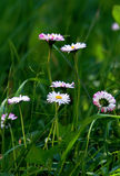 czuli wildflowers Fotografia Stock