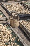 Czupirzy owoc rozprzestrzenia na platformach pod słońcem suszyć po to, aby Zdjęcie Stock