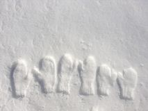 czyścić mitynka świeżego śnieg Obrazy Royalty Free