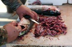czyścić ryba Zdjęcie Royalty Free
