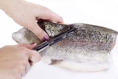 czyścić ryba Obrazy Royalty Free