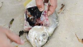 Czyści świeża ryba zdjęcie wideo