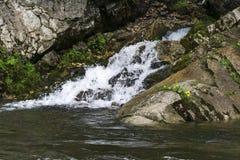 Czyści dopływ rzeka w halnym lesie Zdjęcia Royalty Free