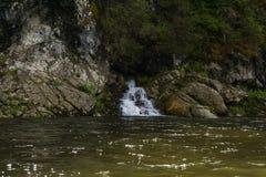 Czyści dopływ rzeka w halnym lesie Obrazy Royalty Free