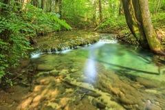 Czyści rzekę i siklawę w lesie Obraz Stock