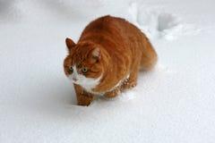 czynu śnieg Fotografia Royalty Free