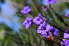Czysta, świeża i piękna błękitna trawa Fotografia Royalty Free