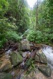 Czysta natura po środku sumiastego wiecznozielonego lasu Umphang przyrody sanktuarium, Tak prowincja, Tajlandia Obrazy Stock