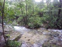 Czysta natura po środku sumiastego wiecznozielonego lasu Umphang przyrody sanktuarium, Tak prowincja, Tajlandia Fotografia Royalty Free