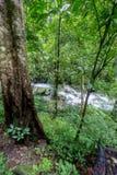Czysta natura po środku sumiastego wiecznozielonego lasu Umphang przyrody sanktuarium, Tak prowincja, Tajlandia Zdjęcie Stock