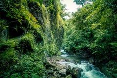 Czysta natura po środku sumiastego wiecznozielonego lasu Umphang przyrody sanktuarium, Tak prowincja, Tajlandia Zdjęcie Royalty Free