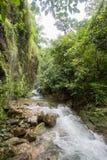 Czysta natura po środku sumiastego wiecznozielonego lasu Umphang przyrody sanktuarium, Tak prowincja, Tajlandia Zdjęcia Stock