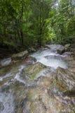Czysta natura po środku sumiastego wiecznozielonego lasu Umphang przyrody sanktuarium, Tak prowincja, Tajlandia Obraz Royalty Free