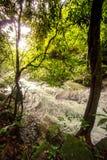 Czysta natura po środku sumiastego wiecznozielonego lasu Umphang przyrody sanktuarium, Tak prowincja, Tajlandia Zdjęcia Royalty Free