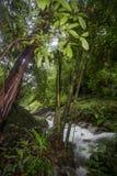 Czysta natura po środku sumiastego wiecznozielonego lasu Umphang przyrody sanktuarium, Tak prowincja, Tajlandia Obraz Stock