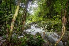 Czysta natura po środku sumiastego wiecznozielonego lasu Umphang przyrody sanktuarium, Tak prowincja, Tajlandia Obrazy Royalty Free