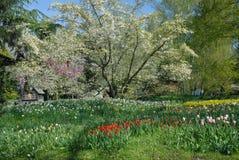 czysta wiosna Zdjęcie Royalty Free