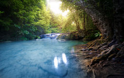 Czysta woda strumienia rzeczni przepływy przez luksusowego lasowego Pięknego su Obraz Stock