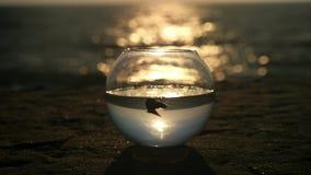 Czystej wody trochę ryba pławik w round akwarium zmierzchu na plaży zbiory