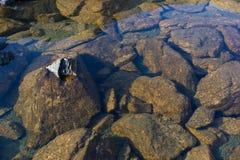 Czystości woda w halnym jeziorze Fotografia Royalty Free