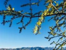 Czysty góry powietrze altai Fotografia Stock