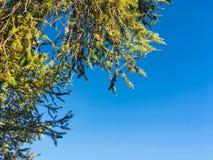 Czysty góry powietrze altai Fotografia Royalty Free