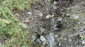 Czysty halny strumień z jasną wodą płynie przez zielonego terenu Szybki przepływ góry wody zakończenie w górę widoku zdjęcie wideo