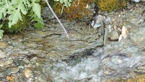 Czysty halny strumień z jasną wodą płynie przez zielonego terenu Szybki przepływ góry wody zakończenie w górę widoku 30-06 karabi zdjęcie wideo