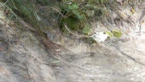 Czysty halny strumień z jasną wodą płynie przez zielonego terenu Szybki przepływ góry wody zakończenie w górę widoku zbiory wideo