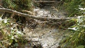 Czysty halny strumień z jasną wodą płynie przez zielonego terenu Szybki przepływ góry wody zakończenie w górę widoku zbiory