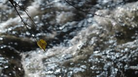 Czysty słodkowodny strumień w deciduous lesie w jesieni zbiory
