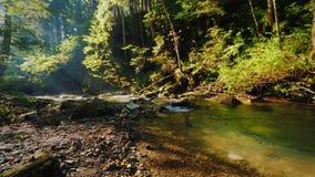 Czysty strumień w pięknym lesie promienie ranku słońca połysk przez gałąź drzewa zbiory