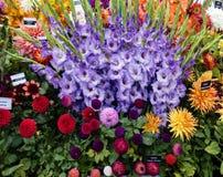 Dália na exposição com tipos de flor Imagens de Stock